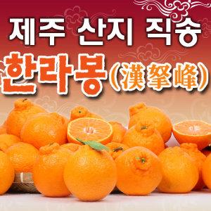 [성산농원]성산농원/한라봉 천혜향/10kg 5kg 3kg/선물용 가정용